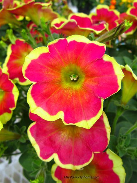florist winter garden fl florist in winter garden fl home design inspirations