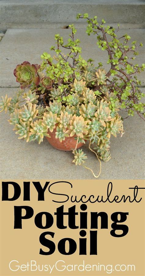 diy potting soil how to make your own succulent soil with recipe