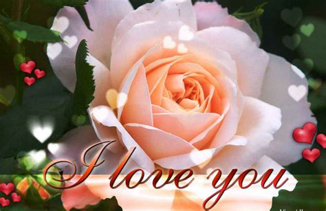 wallpaper flower i love you i love you images pictures and quotes for him and her