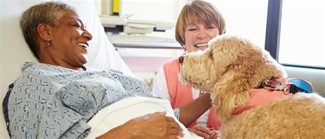 how to get therapy certification how to get your certified as a therapy wellness pet food