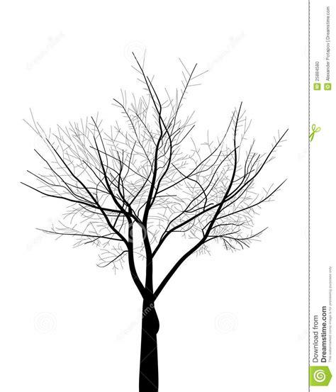 Isolated Black Bare Tree Illustration Stock Photo Image
