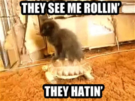They See Me Rollin Meme - i cat gifs