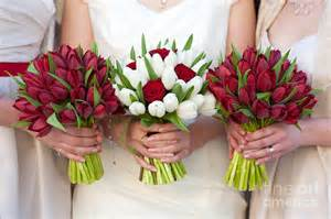 Tulip Arrangements Red And White Tulip And Rose Wedding Bouquets Photograph