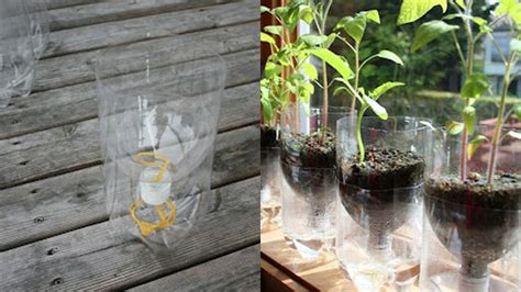 Water Planters by Turn A Plastic Bottle Into A Self Watering Planter