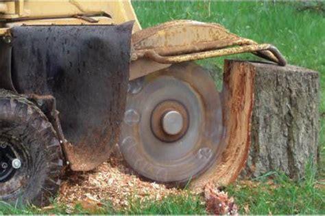 how does home depot stump grinder rental service saves