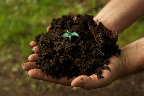 is fertilizer is it better to grow cannabis in soil or hydro grow easy