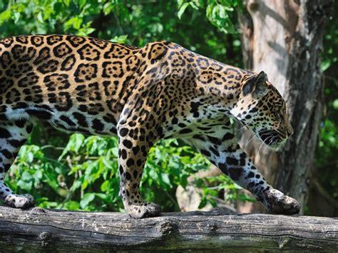 imagenes de animales y plantas de brasil los mejores pa 237 ses para los amantes de los animales