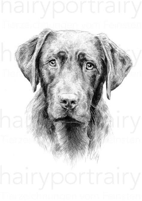 die besten  hund zeichnen ideen auf pinterest hunde