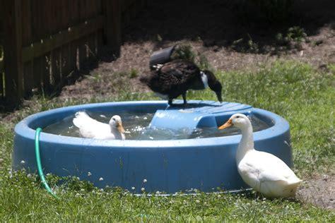 backyard duck pond ideas backyard duck pond ideas gogo papa com
