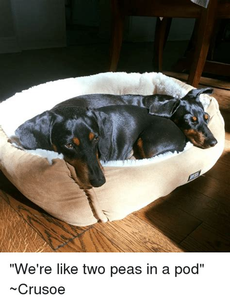 Two Peas In A Pod Meme - we re like two peas in a pod crusoe meme on sizzle