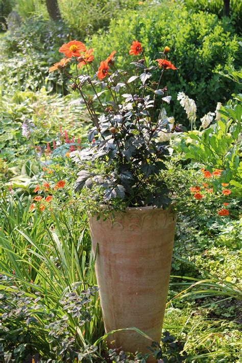 Longfield Gardens by How To Keep Container Plants Looking Their Best