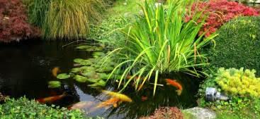 poisson bassin ext 233 rieur choisir et 233 lever ooreka