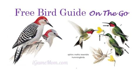 free app peterson backyard birds of america igamemom