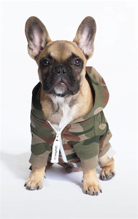 onesie for dogs onesie le