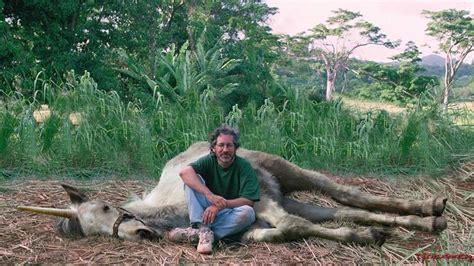 il triceratopo in giardino spielberg poursuivi par la peta pour le meurtre d un