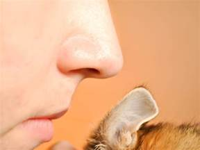 3 ways to check cats for ear mites wikihow