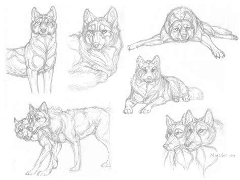 wolf sketches by naragon on deviantart