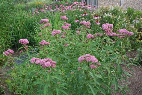 Milkweed Garden by Town Mouse And Country Mouse March 2016