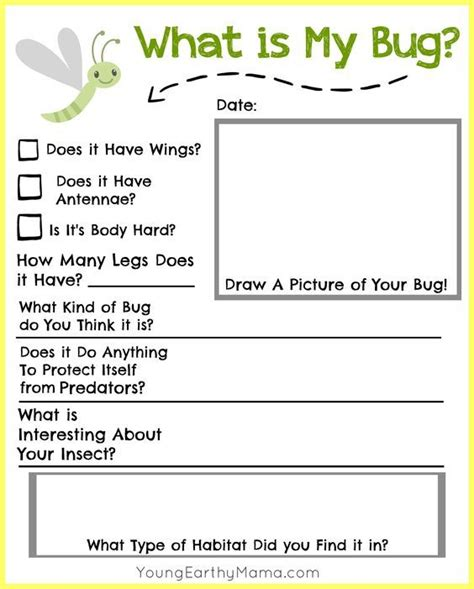 Book Report Worksheet For Kindergarteners by 245 Best Insects Study Images On Insects Bug