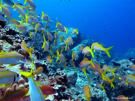 wallpaper keindahan alam bawah laut dunia bawah laut pulau weh sabang rinaldi ad