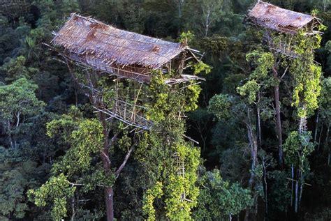 korowai tree house west papua indonesia photo gallery