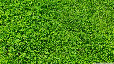 wallpaper hd green grass green grass wallpaper 1109370
