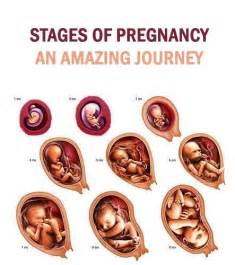 1st month of pregnancy 63 best images about pregnancy food on pinterest