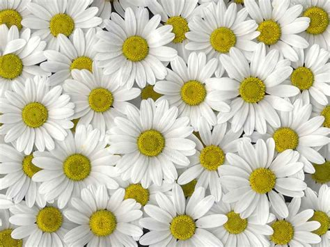 corso di fiori corso di fiori cake ideas and designs