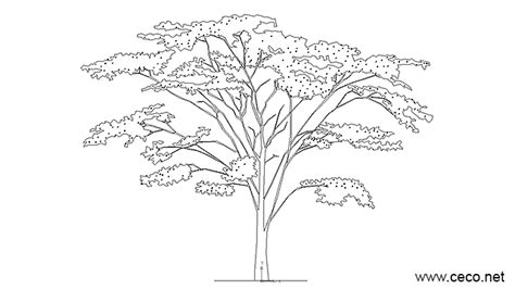 tree templates for autocad tree with foliage and flowers in landscaping trees
