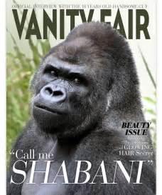designcrowd reddit shabani the gorilla makes an awesomely handsome designer model