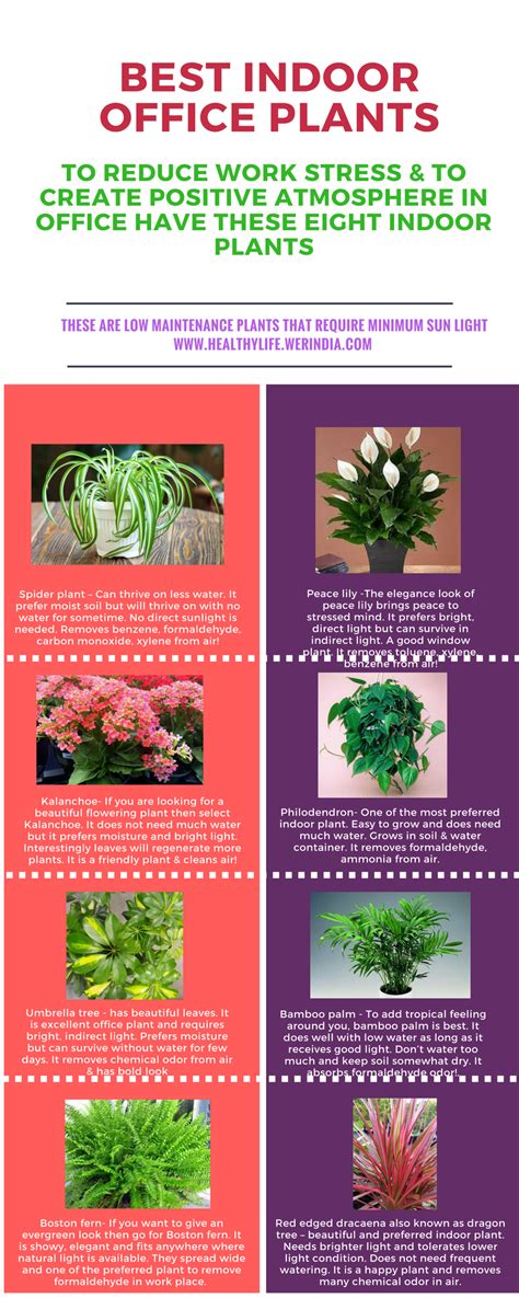 Best Office Desk Plants This Summer Consider Jaljeera Healthylife Werindia