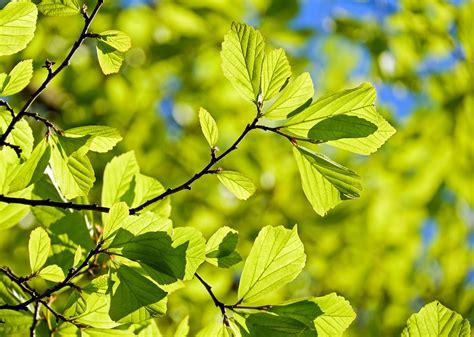 imagenes de hojas otoñales l espace du mouvement cr 233 atif spontan 233 it 233