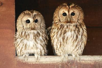 how do owls show affection animals mom me