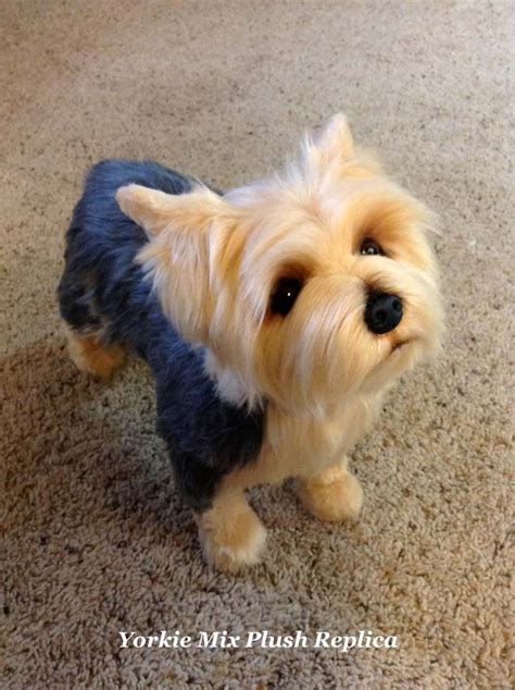 teacup yorkie stuffed animal yorkie the yorkie mix breeds picture