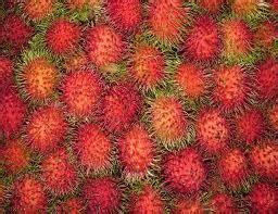 Rambutan Binjai Kondisi Berbunga 1 rambutan binjai bibit buah buah impian
