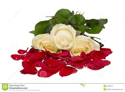 imagenes verde blanco y rojo rosas italianas rojo blanco y verde aislado en blanco