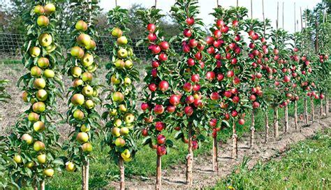 Quel Arbre Planter Dans Jardin by Quel Arbre Dans Mon Jardin Quel Arbre Dans Mon Jardin
