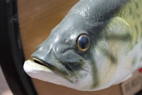 Will You Eat Fish With The Heads Still On by Why We Eat The Of A Fish Crownheights Info Chabad