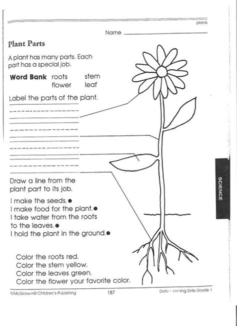 1 Grade Science Worksheets by 17 Best Images About Pk 3rd Science Plants Plant Parts