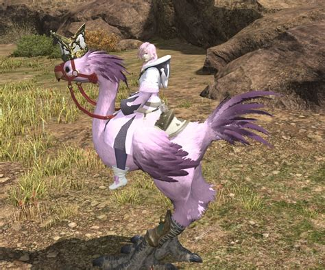 chocobo colors ffxiv chocobo colors ffxiv chocobo color quotes