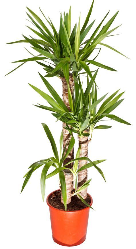 tipi di piante da appartamento 7 piante da appartamento verde impianti s n c