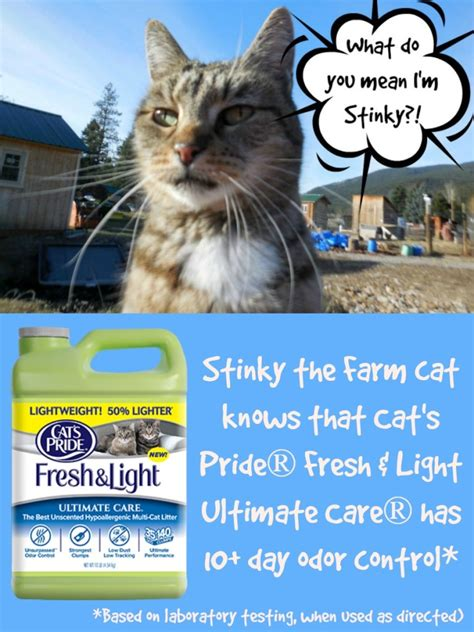 cat s pride fresh and light the ultimate cat litter for the farm cats