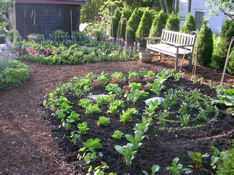 kitchen garden ideas expert design consultation ellen ecker ogden