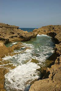 puerto rican caign wikipedia the free encyclopedia 277 best puerto rico images on pinterest puerto rico