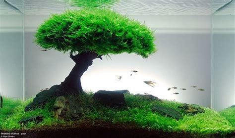 Lu Tl Aquarium resimleri internetten ald箟m