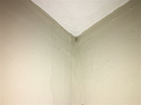 bed bugs on ceiling bed bug removal bed bug exterminators best treatments