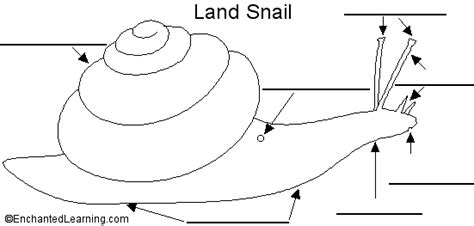 diagram of land snail image gallery snail labeled