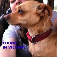 found dogs near me 1000 images about found dogs ak on arkansas monday friday and rock