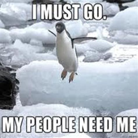 Penguin Memes - 24 memes that prove penguins are the funniest animals on