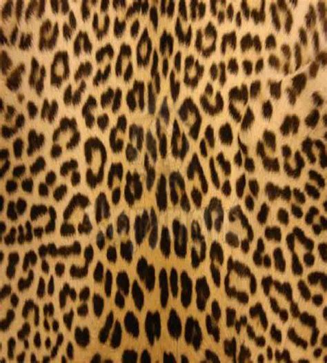 Leopard Print by Index Of Studentpages Ddematteo Images